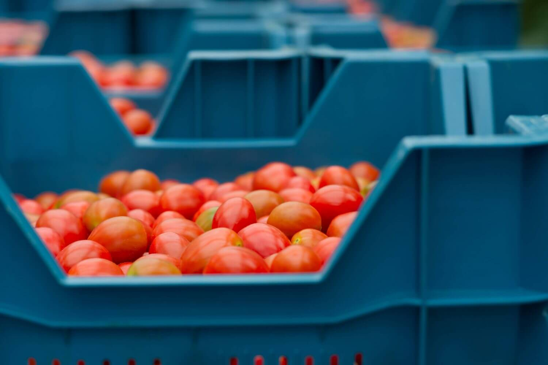 frrsh fruits stored in basket