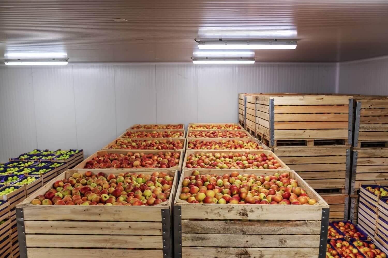 รักษาคุณภาพของสินค้าด้วยระบบคลังสินค้าห้องเย็น - SCG Logistics